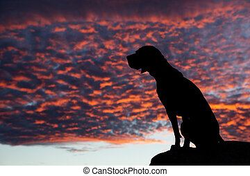 sitting dog in the sunset