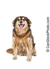 Sitting dog on a white background
