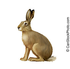 Sitting hare, cute easter bunny, Isolated on white
