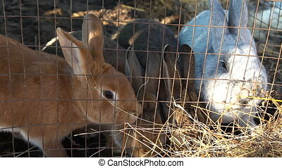 Sitting in a cage rabbits eat hay
