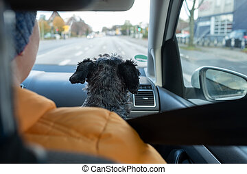 Sitting in car with dog driving on road trip.