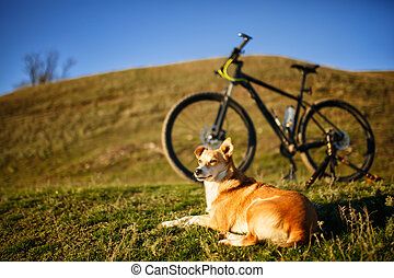 sitting red dog and mountain bicycle with greenfield...