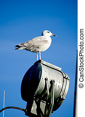 Sitting seagull on lamp