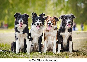 sittingon, gras, gruppe, hunden, glücklich