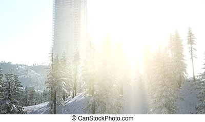 sity and forest in snow at sunrise