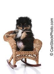 sitzen, korbgeflecht, uppy, miniatur, posierend, stuhl