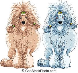 sitzen, rasse, vektor, franzoesischer pudel, hund
