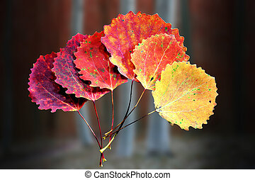 Six autumn aspen leaves