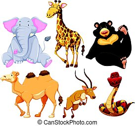 Six different types of wild animals