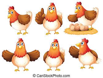 Six egg-laying hens