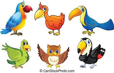 Six flying birds