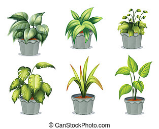 Six leafy plants with pot - Illustration of the six leafy...