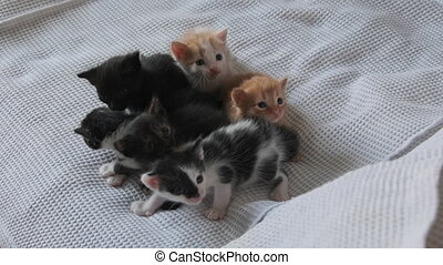 Newborn Little Kittens Crawling on a White Background. Close-up. Six domestic kittens on white cloth. Cute kittens are one month old. Group of Black, white, red, and multi-colored kittens. Slow Motion