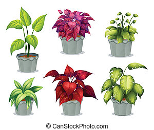 Six non-flowering plants - Illustration of six non-flowering...