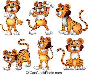 Six positions of a tiger - Illustration of the six positions...