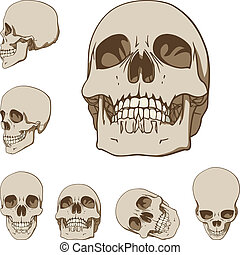 Set of six drawings of human skull. Vector illustration