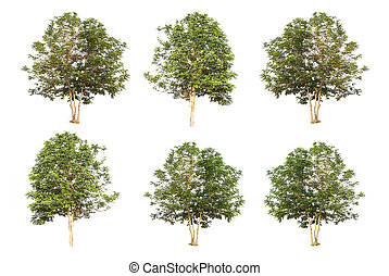 six trees collection isolated on white background with clipping path