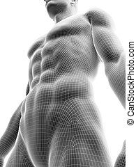 sixpack, abs
