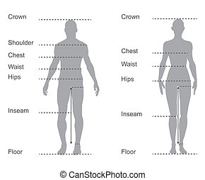 size chart, measurement diagram of male and female body...