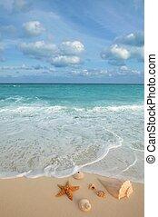 sjögång skal, sjöstjärna, tropisk, sand, turkos, karibisk
