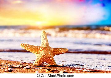 sjöstjärna, på, den, exotisk, strand, hos, varm, solnedgång, ocean, waves., resa, semester, lov, begreppen