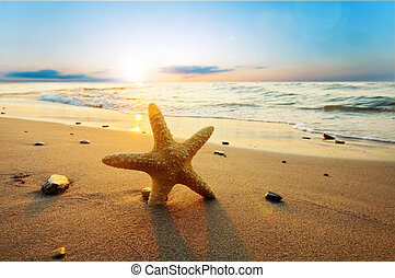 sjöstjärna, på, den, solig, sommar, strand