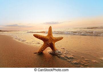sjöstjärna, på, den, solig, sommar, strand.