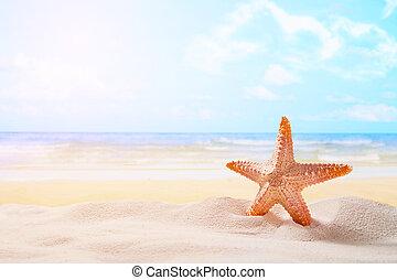 sjöstjärna, på, sommar, solig, strand, hos, ocean, bakgrund., resa, semester, begreppen