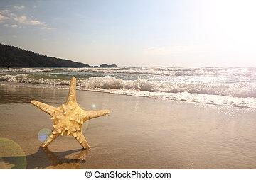 sjöstjärna, stranden