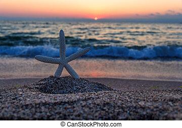sjöstjärna, stranden, hos, solnedgång