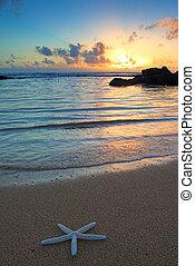 sjöstjärna, stranden, hos, solnedgång, kauai, hawaii