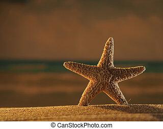 sjöstjärna, stranden, hos, soluppgång