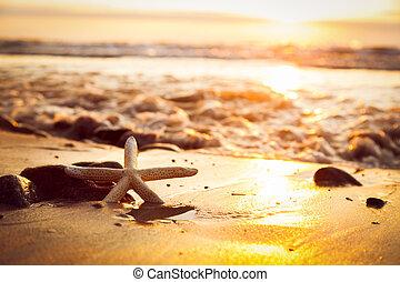 sjöstjärna, stranden, hos, sunset., sol lysande, på, den, hav