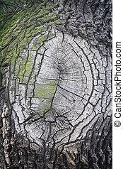 skälla, ved, träd, struktur