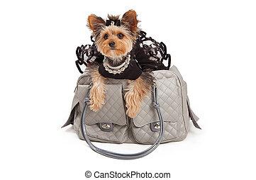skämmat bort, hund, in, designer, resa väska