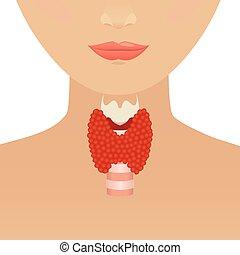 sköldkörtel, kvinna, silhuett
