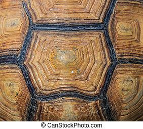 sköldpadda, bakgrund