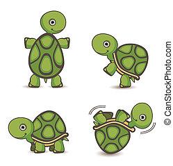 sköldpadda, sätta