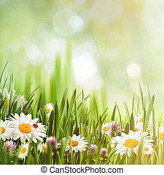 skönhet, naturlig, bakgrunder, med, kamomill, blomningen, för, din, design