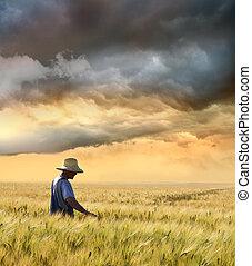 skörd, bonde, hans, kontroll, vete
