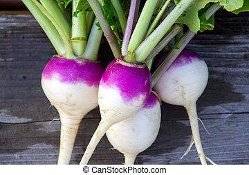 skördat, frisk, rova, grönsak