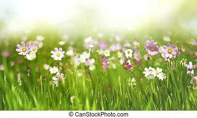 skønhed, sæsonprægede, landskab, hos, vild blomstrer, og, græs