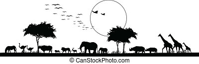 skønhed, silhuet, i, safari, dyr
