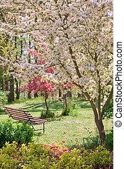 skønhed, træ, blomstring, hos, bænk