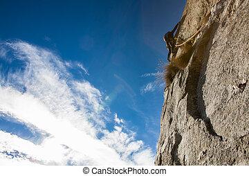 skała arywista, na, niejaki, skała, face.