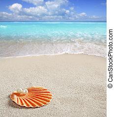 skal, karibisk, tropisk, pärla, sand, vita strand