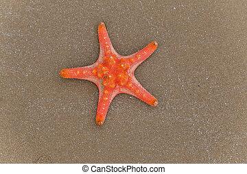 skal, sjögång stjärna, -, sommar, bakgrund