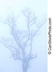 skallig, träd, in, vinter, under, djup, dimma
