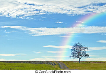 skallig, träd, med, väg, och, regnbåge