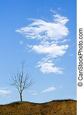 skallig, träd, och, moln